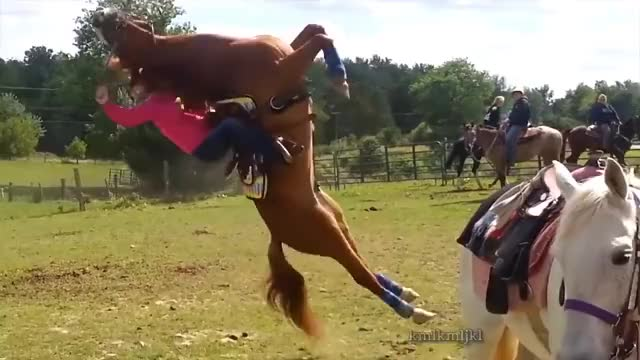 Watch horse GIF on Gfycat. Discover more All Tags, Backflip, KML, edit, funny, horse, kmlkmljkl, wrestling GIFs on Gfycat