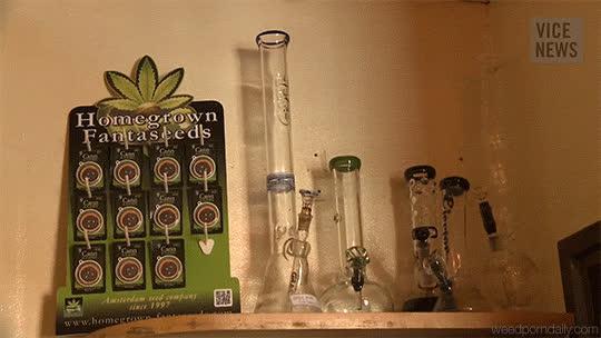 420, amsterdam, buds, canada, cannabis, drugs, ganja, gif, green, grow, growing, herb, kush, marijuana, mary jane, medical marijuana, mmj, vice, Vice Cannabis - Amsterdam GIFs