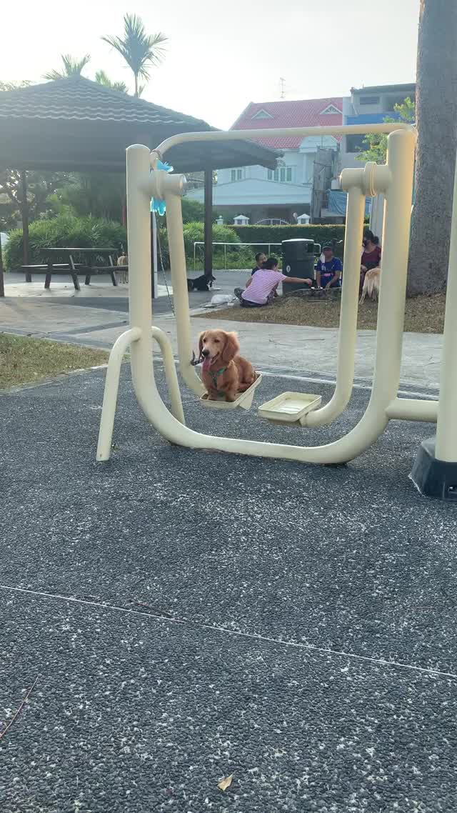 Watch and share If I Fits, I Swings. GIFs by ramenja on Gfycat