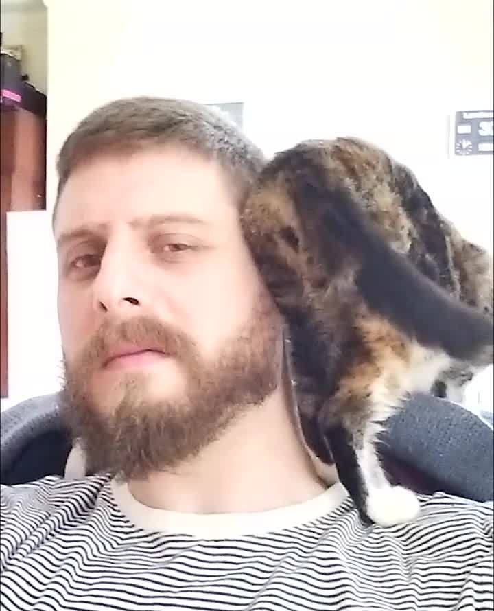 awwgifs, awww, catgifs, Shoulder cat GIFs