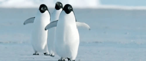 Penguins. Penguins. Penguins. Penguins. Pen. . .guin. Penguinpenguinpenguinpenguinpenguins! GIFs