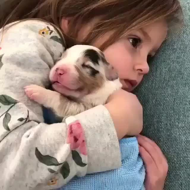 The coziest pupper in the world GIFs