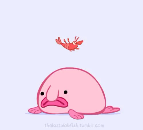 Watch Blobby the Blobfish GIF on Gfycat. Discover more animaiton, blobby, blobby the blobfish, blobfish, bounce, chubby, cute, friends, gif, marine life, shrimp, squishy GIFs on Gfycat