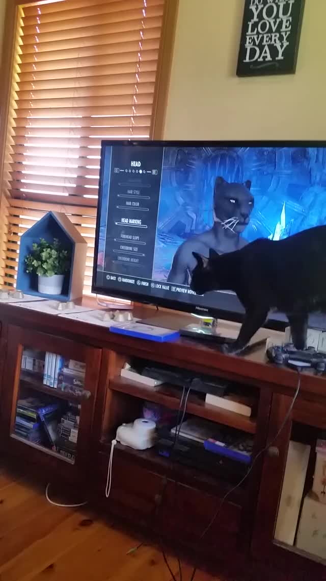 Watch and share Cat GIFs and Eso GIFs on Gfycat