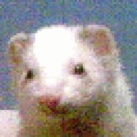Watch winking ferret GIF on Gfycat. Discover more related GIFs on Gfycat