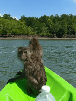 Today two monkeys wanted to join us for kayaking. [OC] GIFs