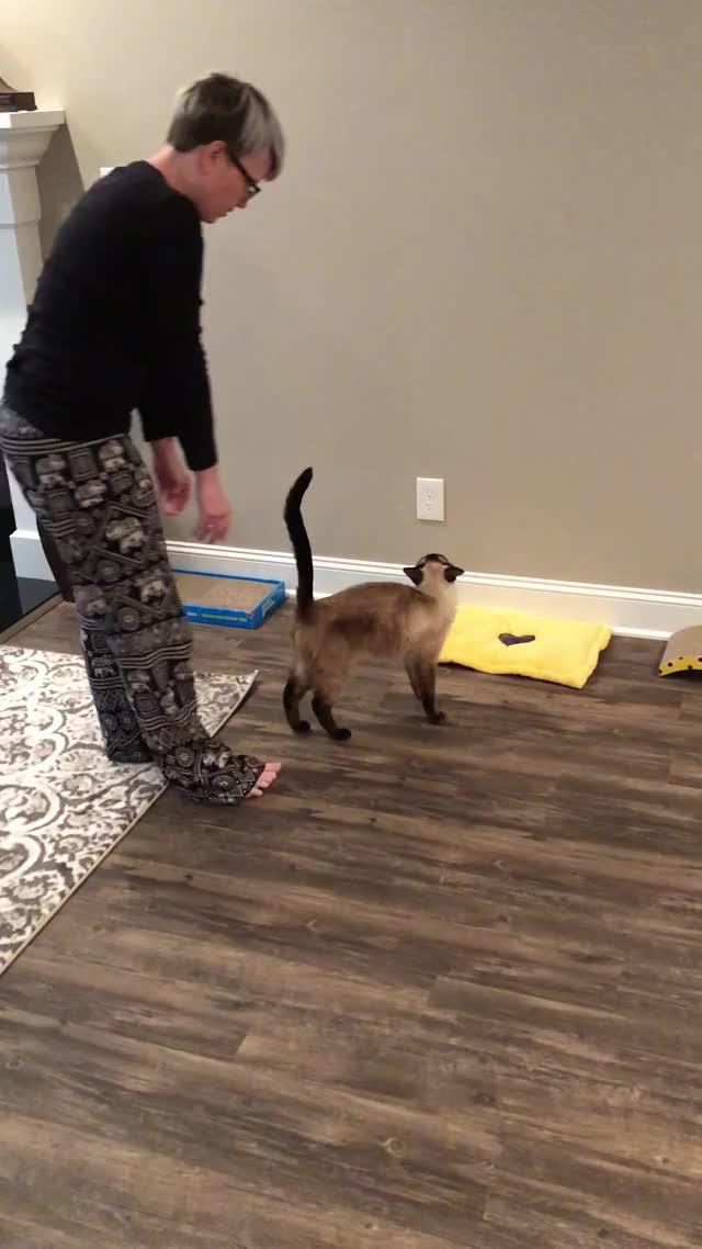 Watch Kitty Yoga GIF by KSG (@westhampton) on Gfycat. Discover more Pets & Animals GIFs on Gfycat