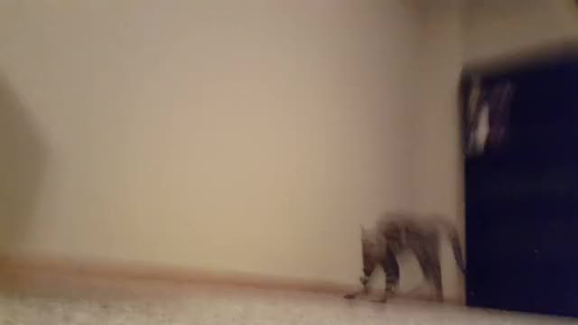 Watch and share Startled By Nothing In Particular (reddit) GIFs on Gfycat