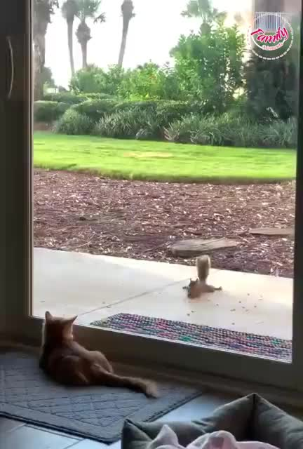 Watch and share Squirrel GIFs and Cat GIFs by newisland on Gfycat