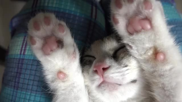 Watch Put your beans in the air! GIF by @saltyteabag on Gfycat. Discover more beans, cats, toes GIFs on Gfycat