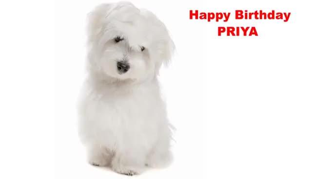 Watch and share Priya - Dogs Perros - Happy Birthday GIFs on Gfycat