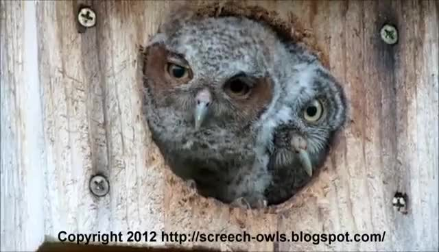 Watch owls GIF on Gfycat. Discover more owls GIFs on Gfycat