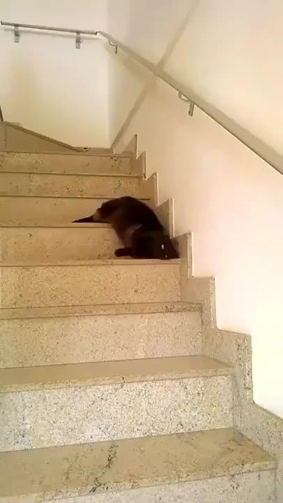 Watch and share Slinky Cat, Slinky Cat, Everyone Loves A Slinky Cat GIFs on Gfycat