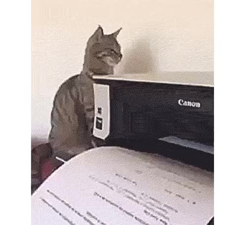 Watch and share Cat Printer GIFs by notlydia on Gfycat