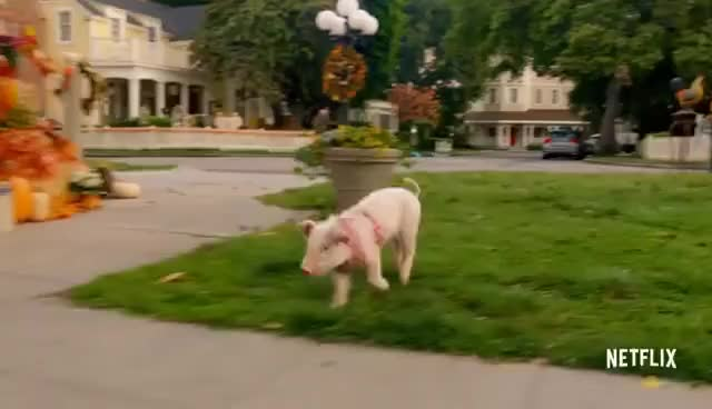 Watch Gilmore Girls: A Year in the Life | Official Trailer [HD] | Netflix GIF on Gfycat. Discover more related GIFs on Gfycat