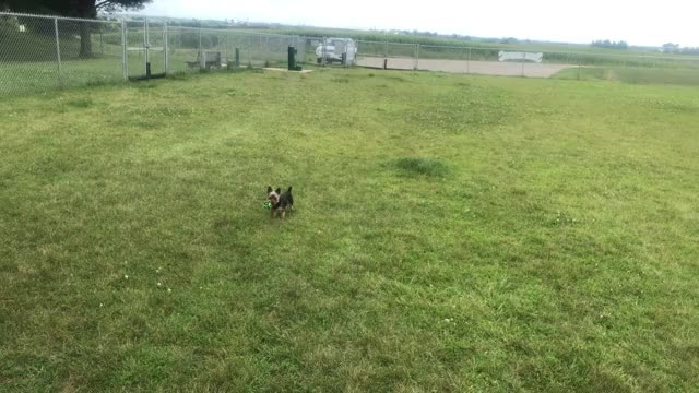Watch and share Yorkshire GIFs and Pupperdo GIFs by Chad Walker on Gfycat
