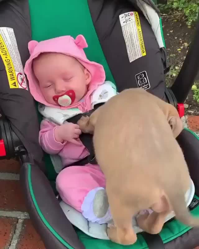 Watch and share Happyending GIFs and Infants GIFs by mayaxs on Gfycat