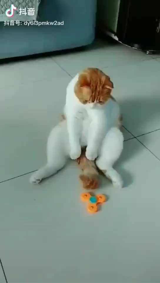 Watch and share Spinner GIFs and Cat GIFs by nitori on Gfycat