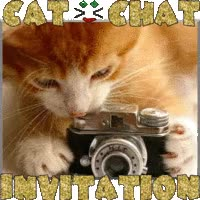 Watch and share CAT〝人〞CHAT (plz. Award 2) animated stickers on Gfycat