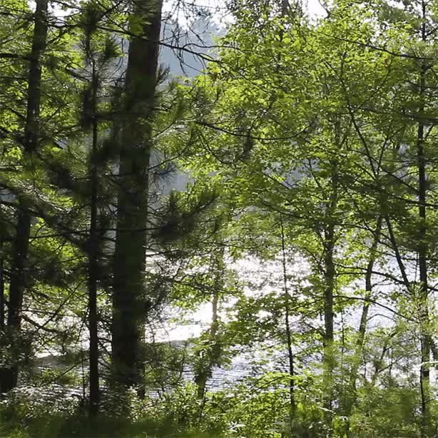Watch and share Forest Bathing GIFs on Gfycat
