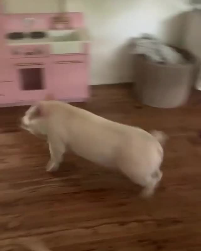 Watch and share Animal Friends GIFs and Dog And Pig GIFs by lnfinity on Gfycat