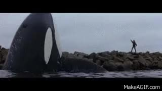Watch and share Free Willy Jump GIFs on Gfycat