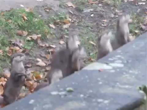 excited, otters, Excited Otters GIFs
