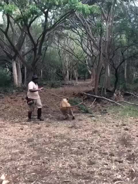Watch and share Lion GIFs by Ancalagon on Gfycat