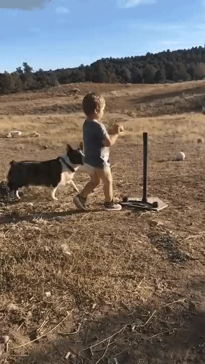 Watch Playing fetch and practicing baseball at the same time GIF by @arkadiusbear on Gfycat. Discover more aww GIFs on Gfycat