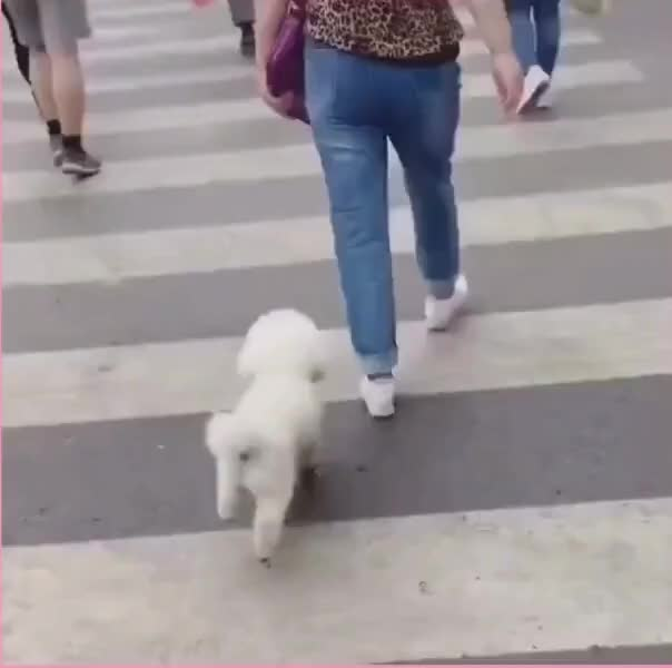 Watch and share Adbiu GIFs and Dog GIFs by NO ZUO NO DIE on Gfycat