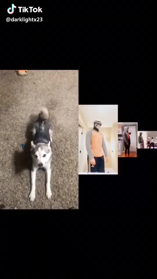 Watch  #dance #puppy #duet #kleekai #foryou #fornite #crazy #xrp GIF by TikTok (@funniestplace) on Gfycat. Discover more dance, duet, kleekai, puppy GIFs on Gfycat