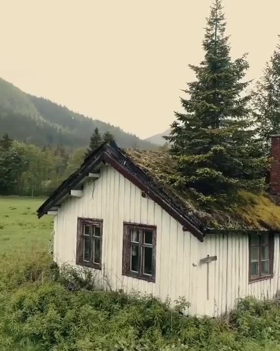 Watch and share Norwegian Cabin GIFs and Nature GIFs on Gfycat