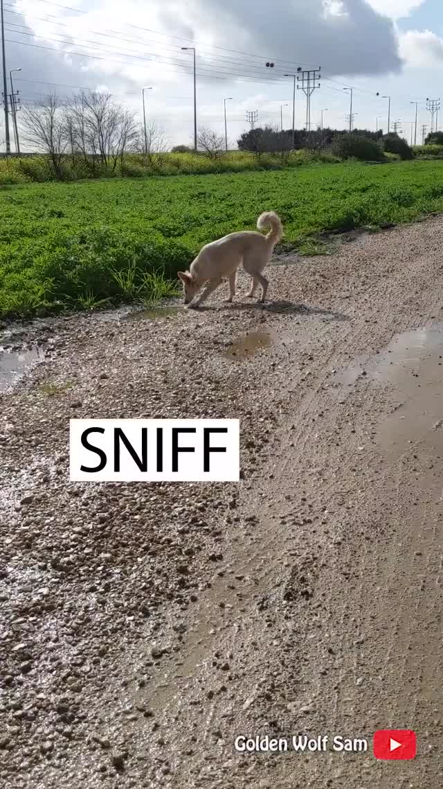 Watch and share Puppylife GIFs and Happydog GIFs by Golden Wolf Sam on Gfycat