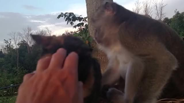 Watch and share Monkey GIFs and Cat GIFs by Beef on Gfycat
