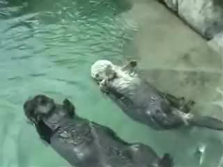 hands, hold, otters, otters hold hands GIFs