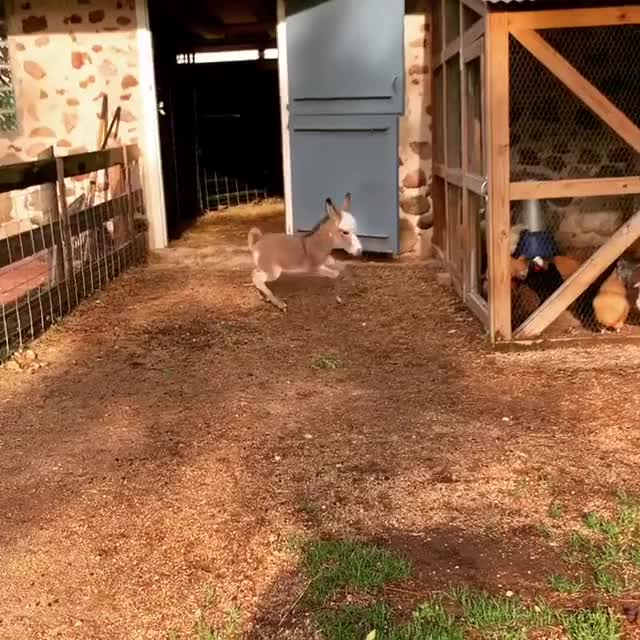 Watch and share Pickles At Juggling Daisies Safe Haven Hobby Farm GIFs by b12ftw on Gfycat