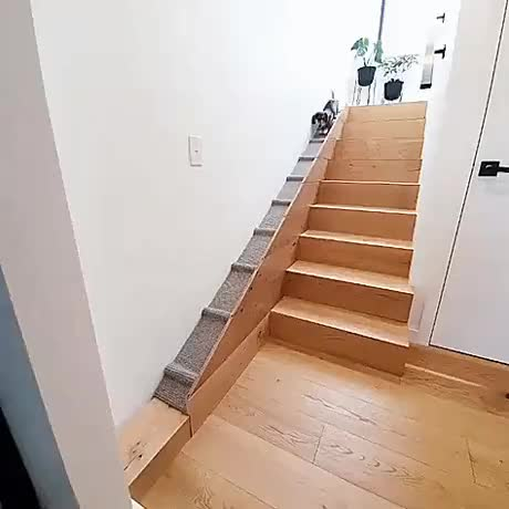This custom built dog stairs