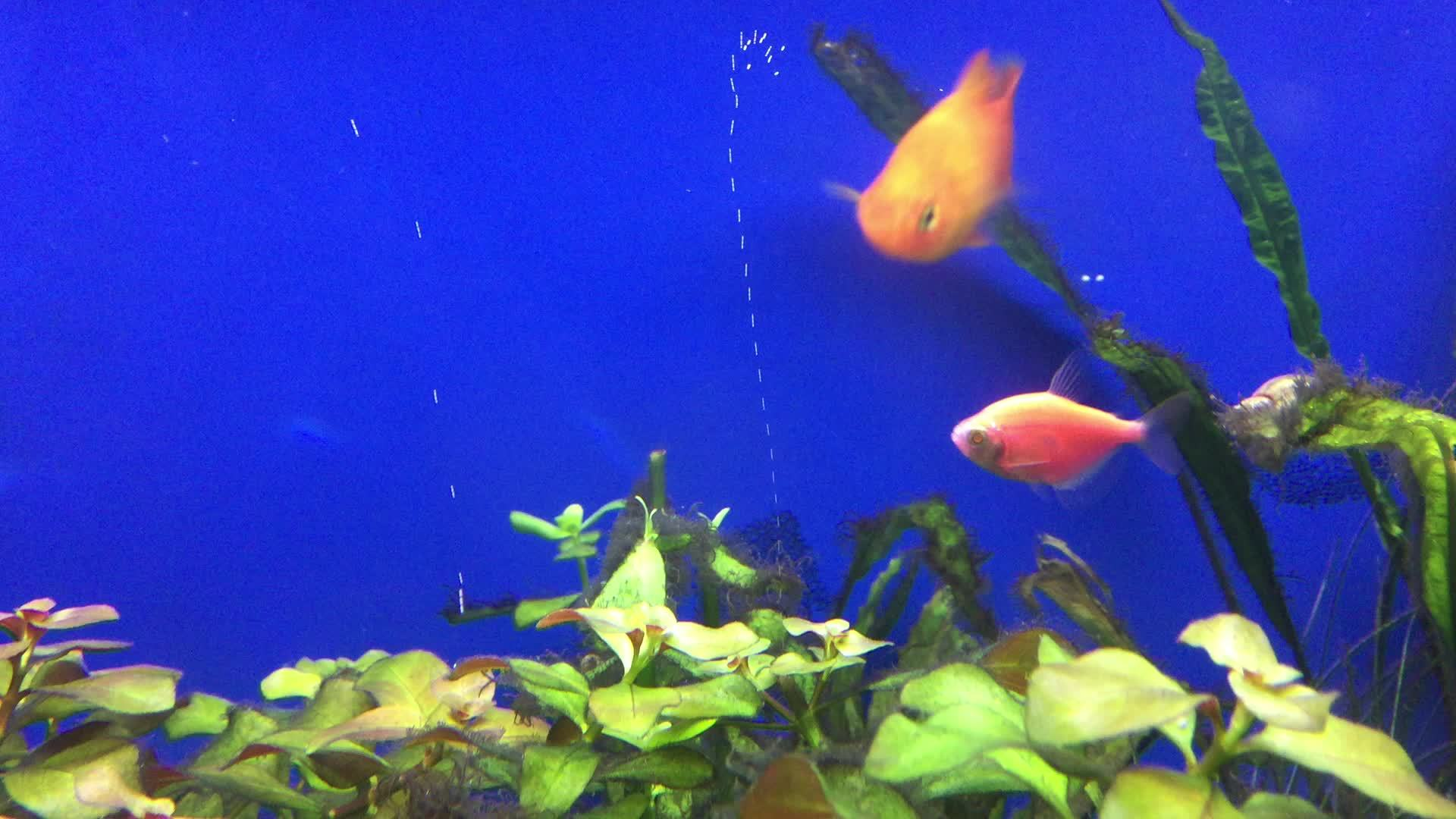 aquariums, plantedtank, Pearling GIFs