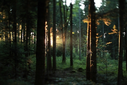 nature, tree, trees, cutting wood GIFs