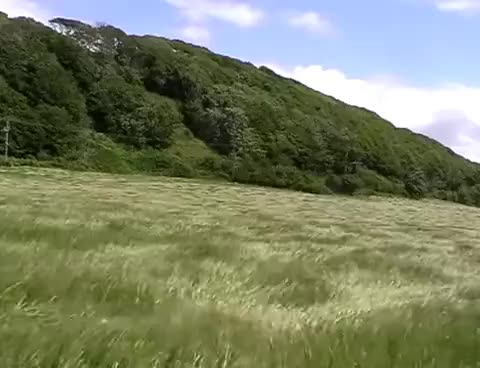 Watch and share Grass Blowing In The Wind. GIFs on Gfycat