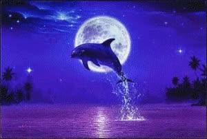 Watch and share Imagens E Frases De Golfinhos GIFs on Gfycat