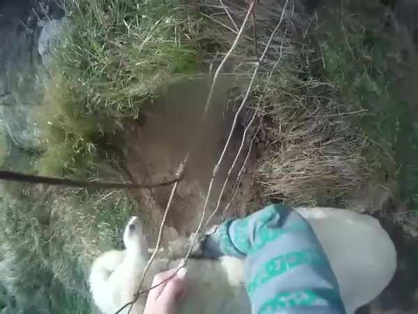 bettereveryloop, Trying to do a good deed. GIFs