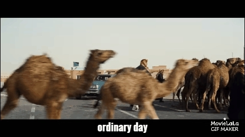 animalgifs, camel, movies, A Hologram for the King GIFs