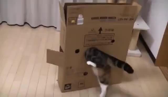 Watch Maru GIF on Gfycat. Discover more cat, kitty, maru, scottishfolod GIFs on Gfycat
