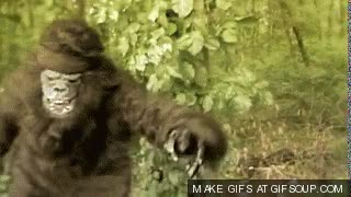 Watch ape GIF on Gfycat. Discover more related GIFs on Gfycat