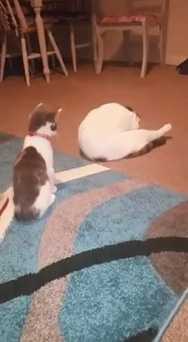 Watch My sisters kitten just wants to play • /r/AnimalsBeingJerks GIF on Gfycat. Discover more reactiongifs GIFs on Gfycat