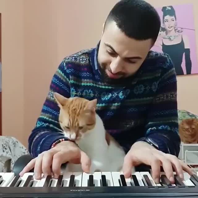 Watch Bliss GIF by @mohayta on Gfycat. Discover more animals, bliss, cats, love, piano GIFs on Gfycat