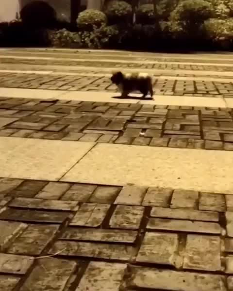 Watch and share Puppy GIFs by mayaxs on Gfycat