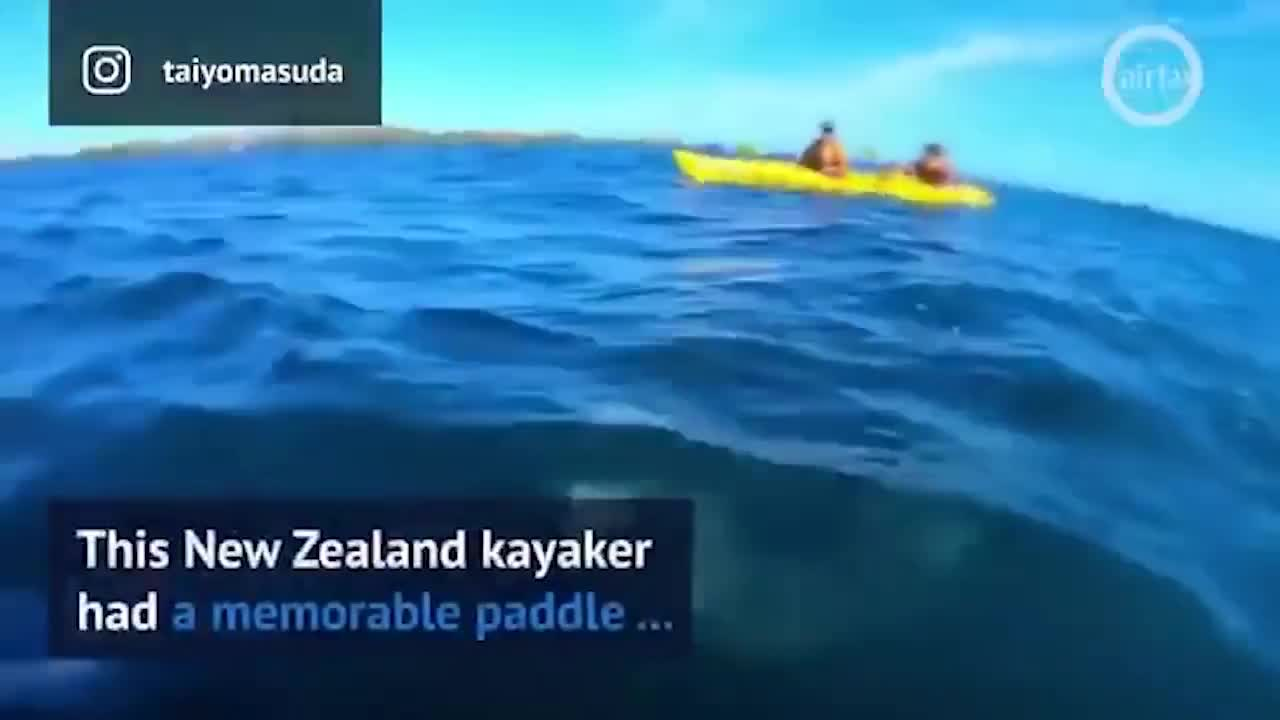 face, kayaker, seal, Seal Slaps Kayaker in the Face with a Giant Octopus GIFs