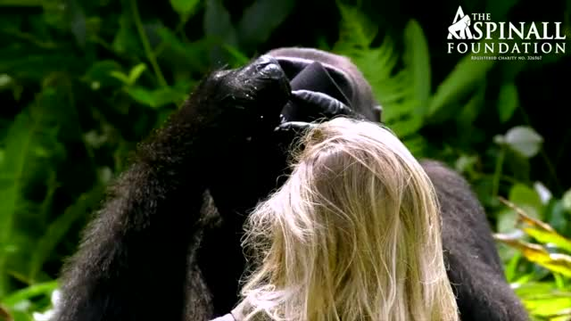 Watch and share Port Lympne GIFs and Foundation GIFs on Gfycat